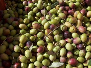 Con guerra Usa a olive rischia 4,2 mld di Made in Italy